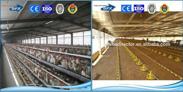 Automated Poultry Farm Metal Chicken House Poultry Farming Layers